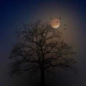 halloween-4582988_640